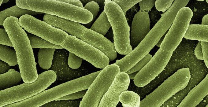Do Steam Mops Kill Bacteria?