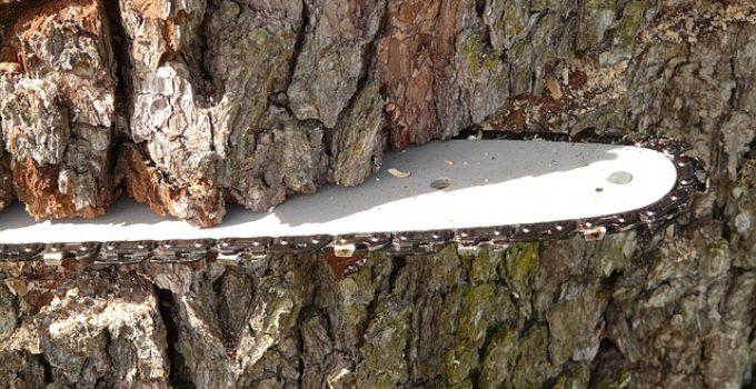 chainsaw blade cutting tree