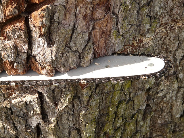 Are Chainsaw Blades Universal?