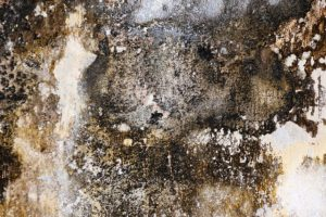 Are Dehumidifiers Good for Mold?