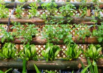 What are the Must-Have Garden Plants