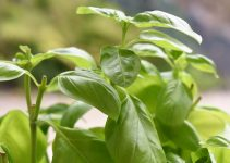 What Are the Must-Have Garden Herbs?