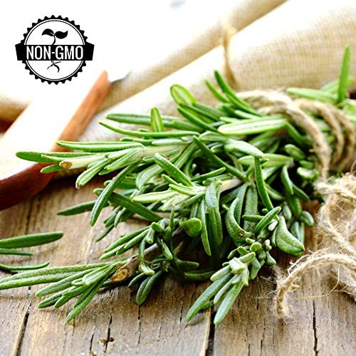 Gaea's Blessing Seeds - Organic Rosemary Seeds