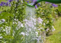 Should a garden be watered everyday?