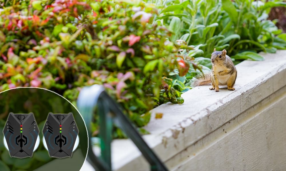 The Best Ultrasonic Squirrel Repeller