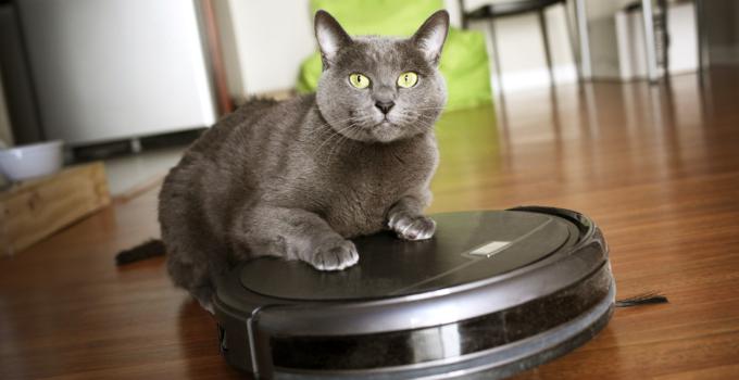 cat over the smart robot vacuum