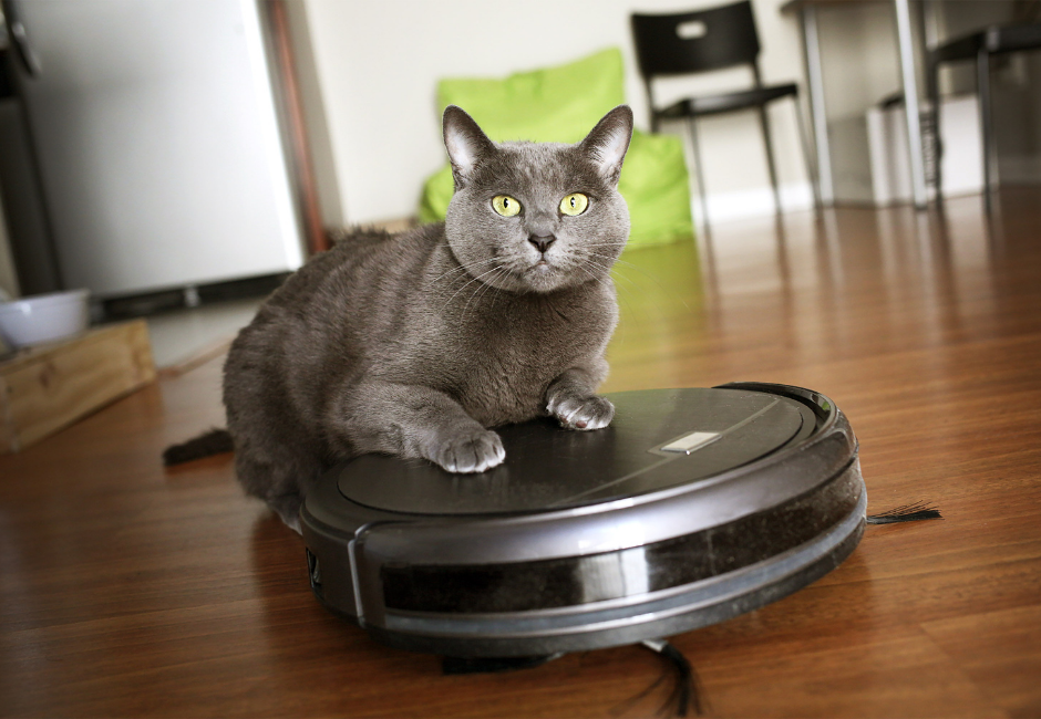 cat over the smart robot vacuum