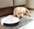 Photo of Smart robot vacuum with sleeping dog