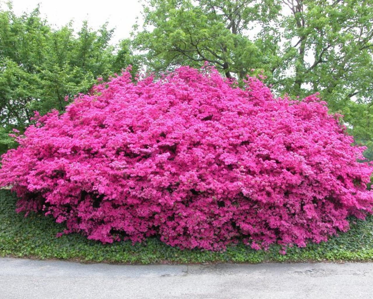 Photo of low growing shrubs