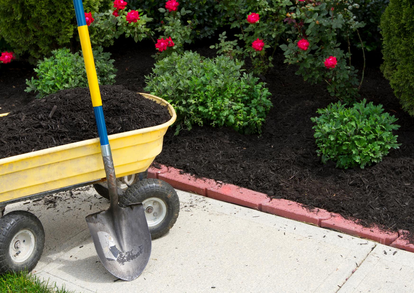 a wheel barrow with gaeden mulch and a shovel in the garden