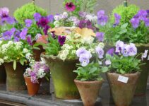What Are the Easiest Flowers to Grow in Pots?
