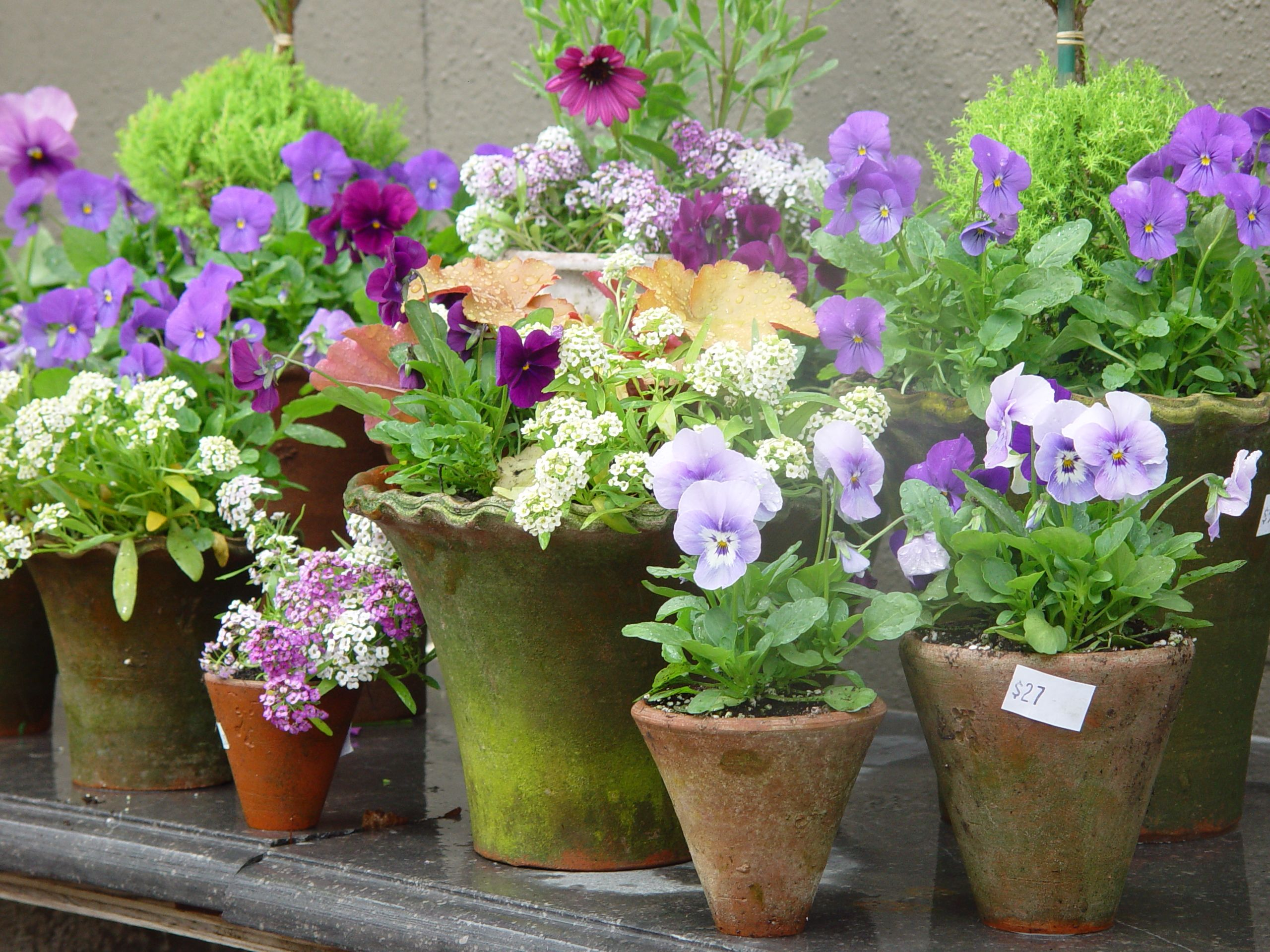 Photo of flowers in a pots