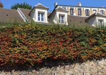Fast Growing Shrubs with Thorns to Protect your Property