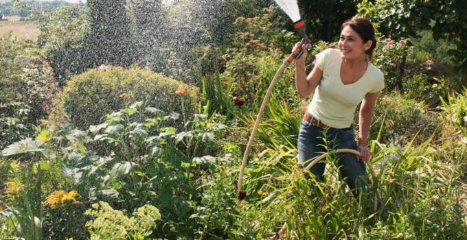 Photo of women watering the plants using hose