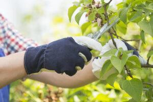 Photo of men gardening gloves