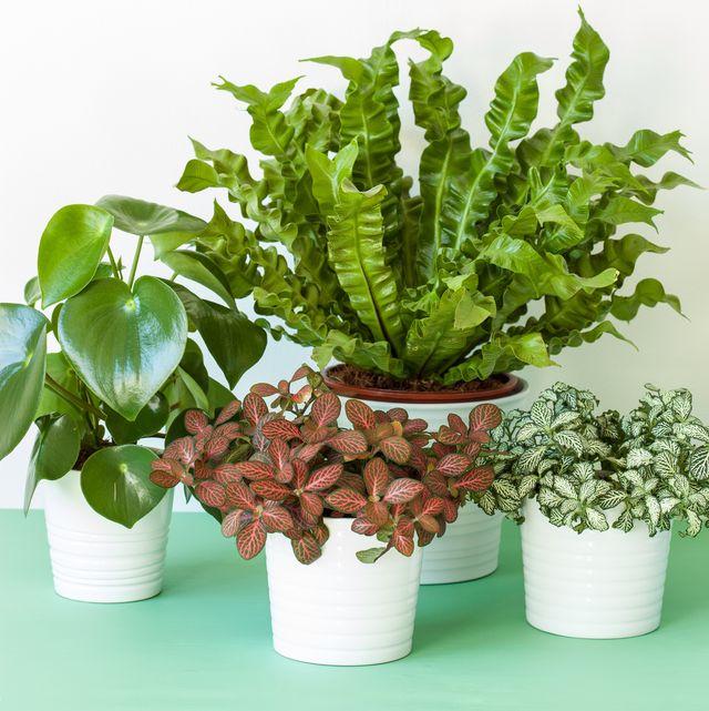 Photo of indoor plants