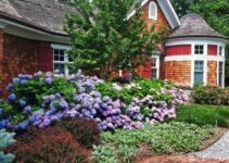 The Best Shrubs to Grow in Florida and Handle Their Challenging Conditions