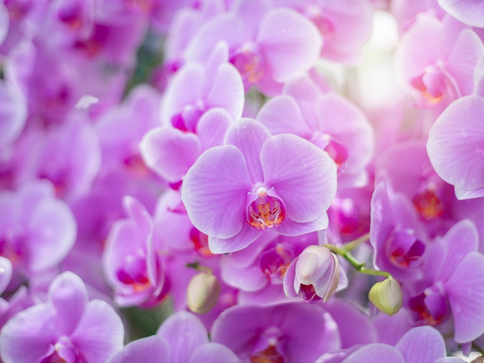 Photo of Orchid