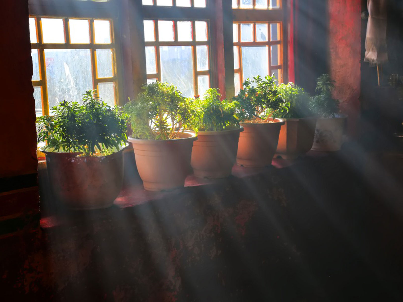 Photo of how plants need a light
