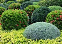 What Shrubs Grow Well in Shade?
