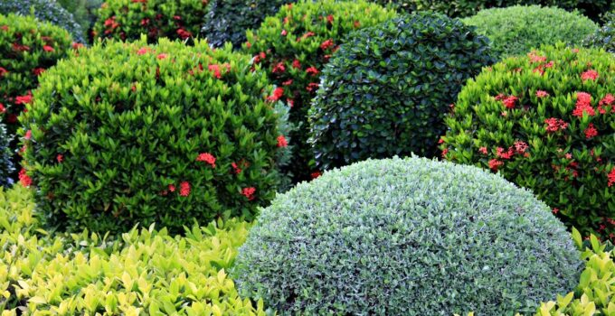 Photo of shrubs