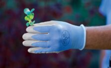 Photo of thermal gardening gloves