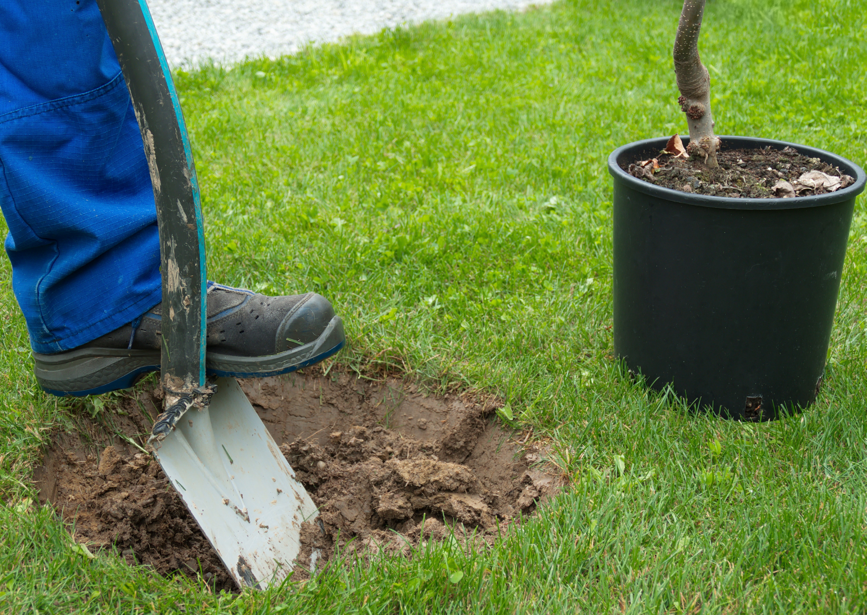Digging Small Holes for Plants