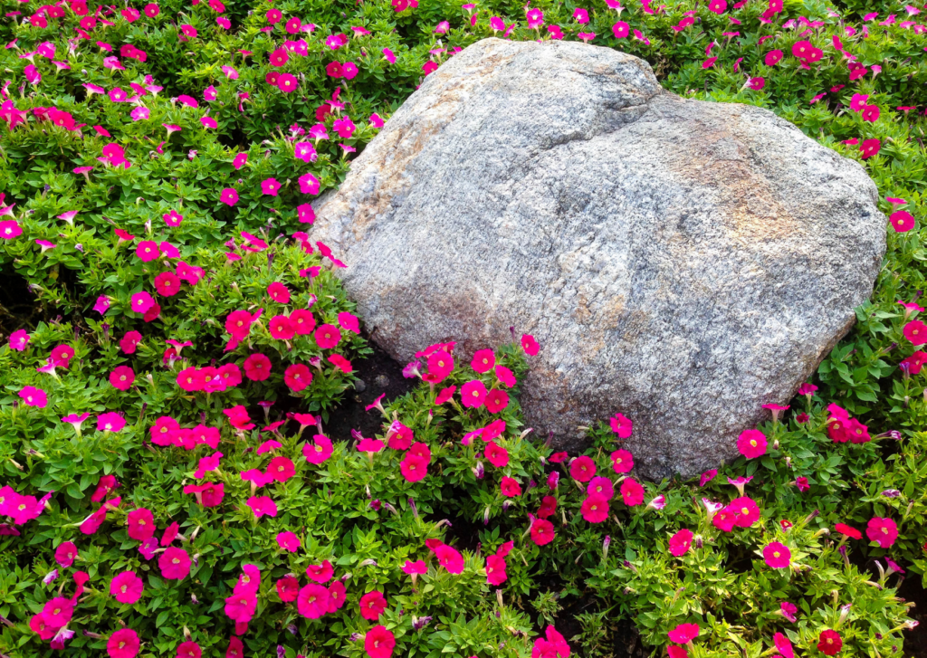 a big rock in a bed of flowers
