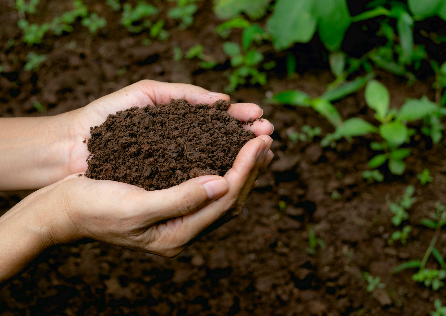 the soil in the hands