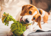 Are Rope Toys Safe for Dogs?