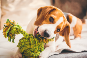 a cute dog playing with the rope toy