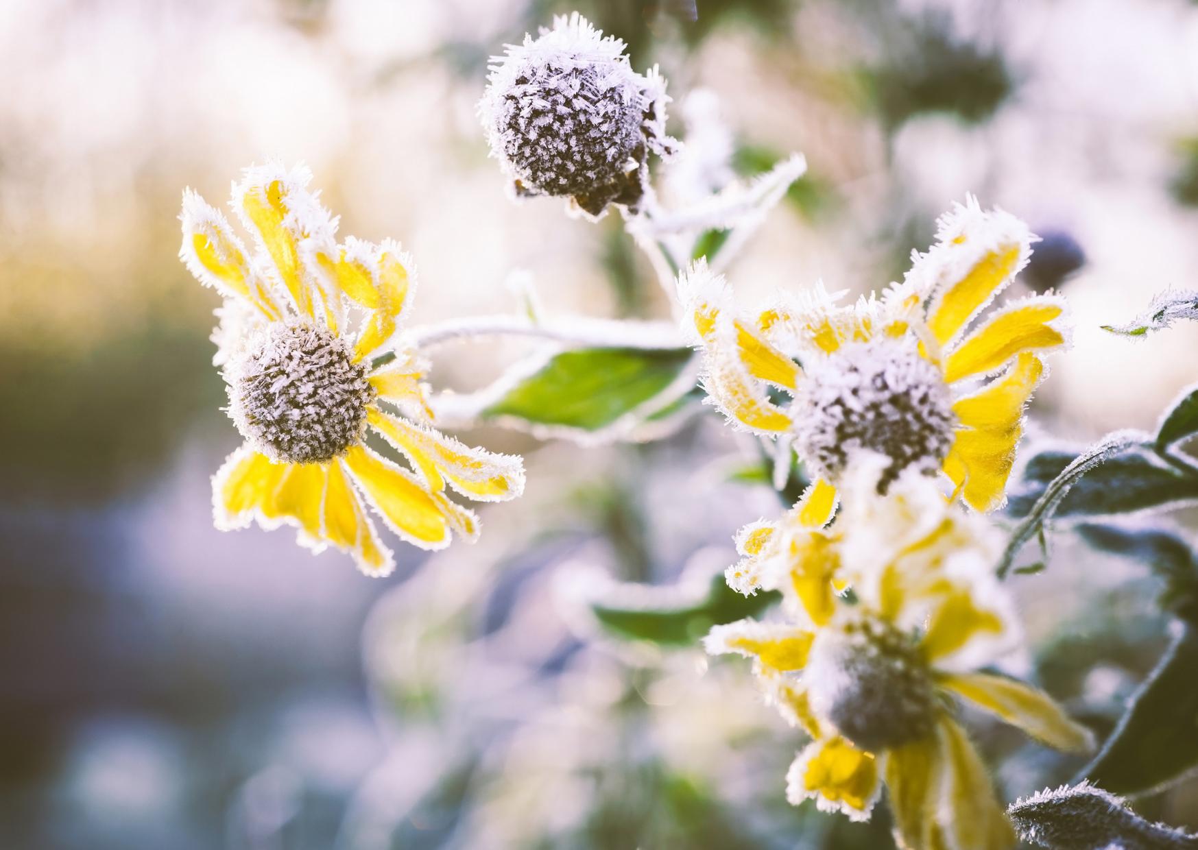 a frozen flowers