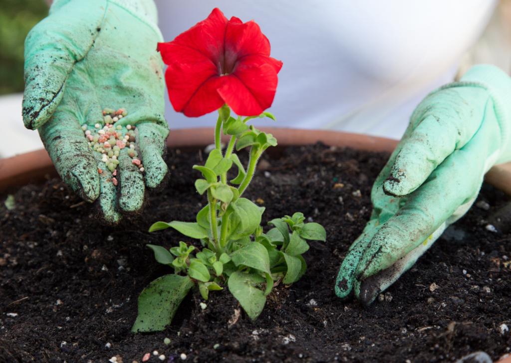 fertilizing the flower plant