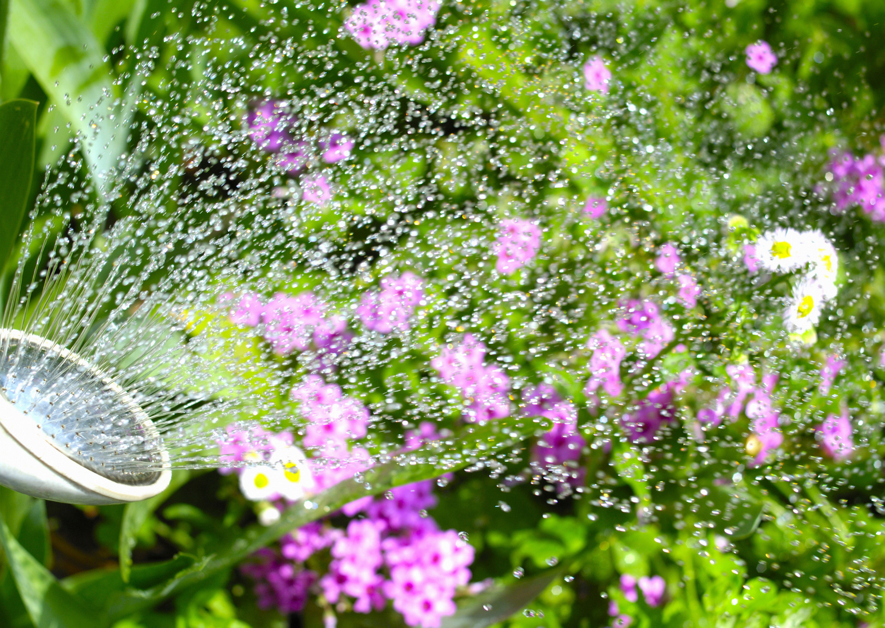 watering the plants
