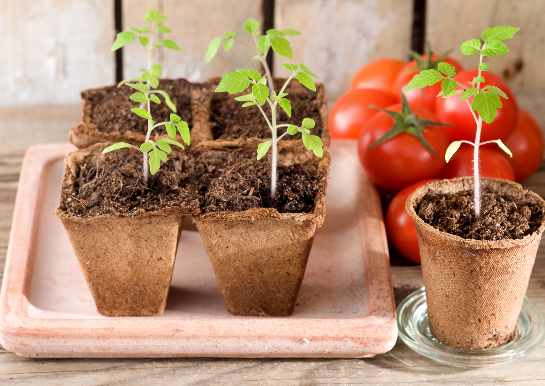 organic potting mix with a plants