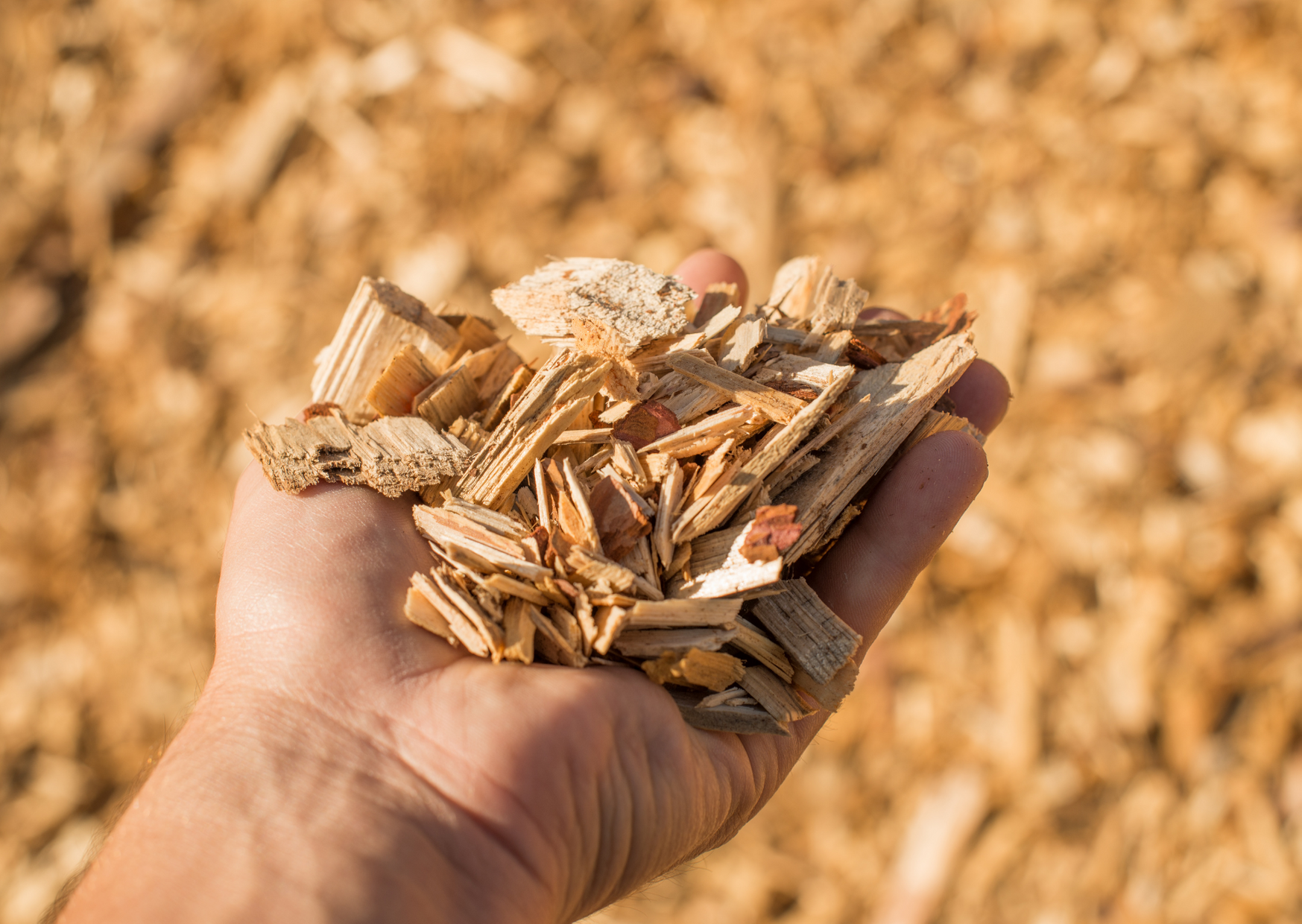 wood chip in a hand