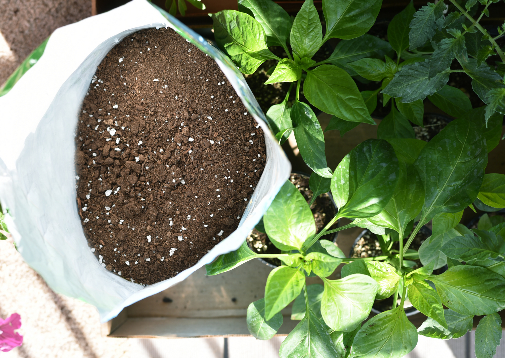 a sack of potting mix and a plants