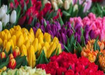 Most Profitable Flowers to Grow