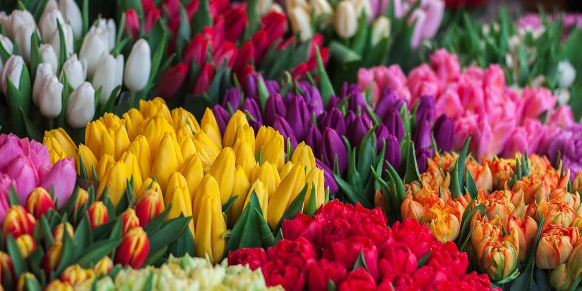 Different Flowers of Most Profitable Flowers to Grow article