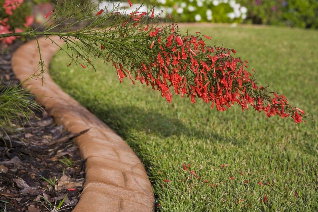 Photo of Garden Edging