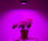 Photo of plants have a led lights