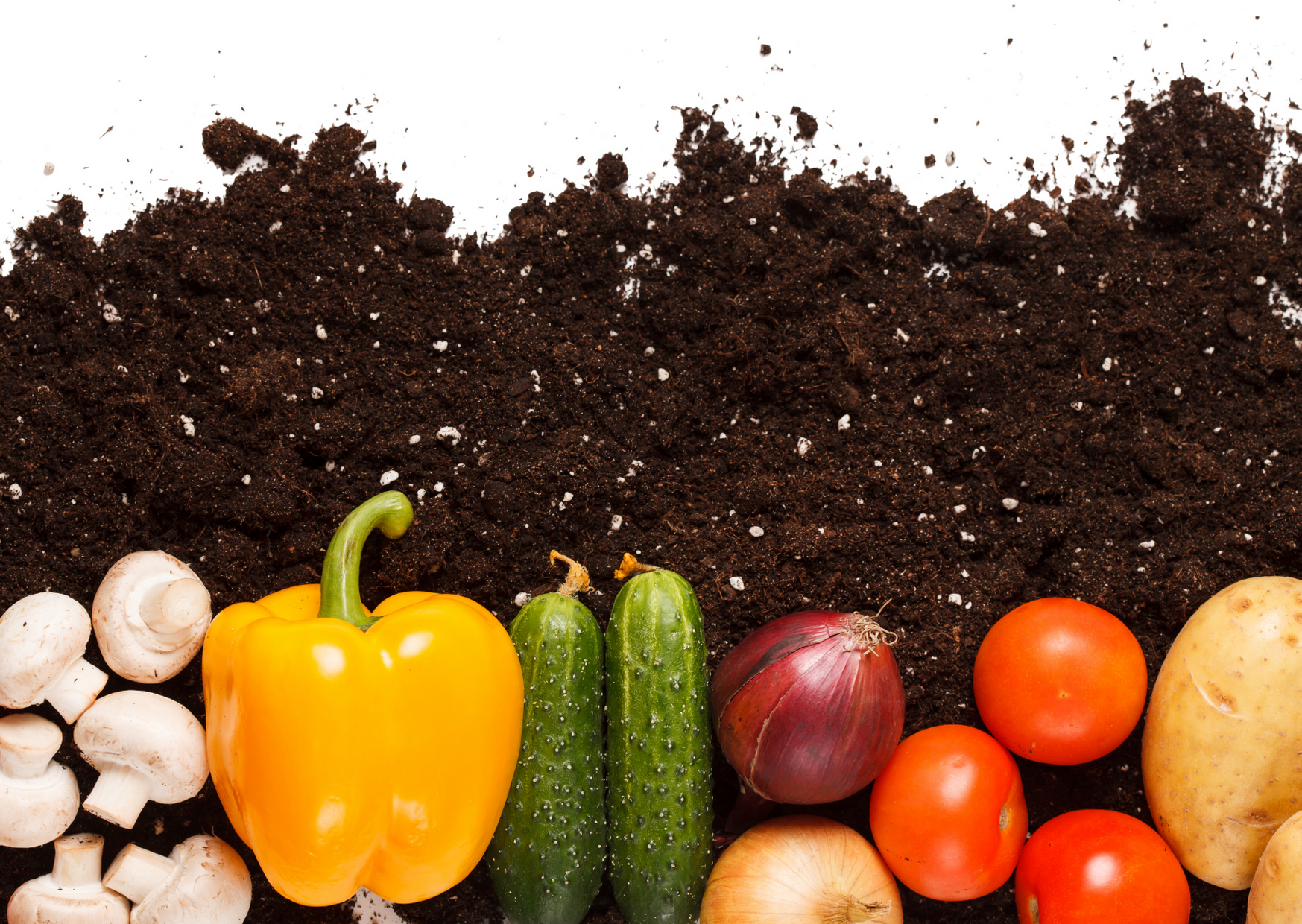 photo of different vegetables with soil