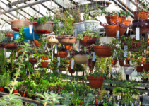 Why Do Plants Grow Better in A Greenhouse?