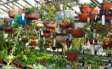 Photo of plants in a greenhouse
