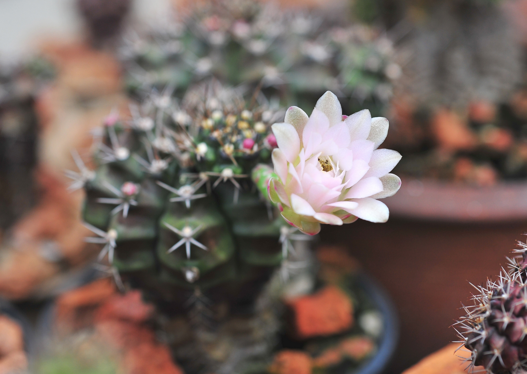 Photo of cactus have flower