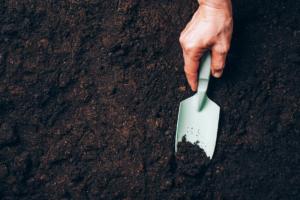 How to Improve Garden Soil Over the Winter