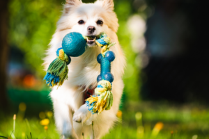a dog playing playing outdoors