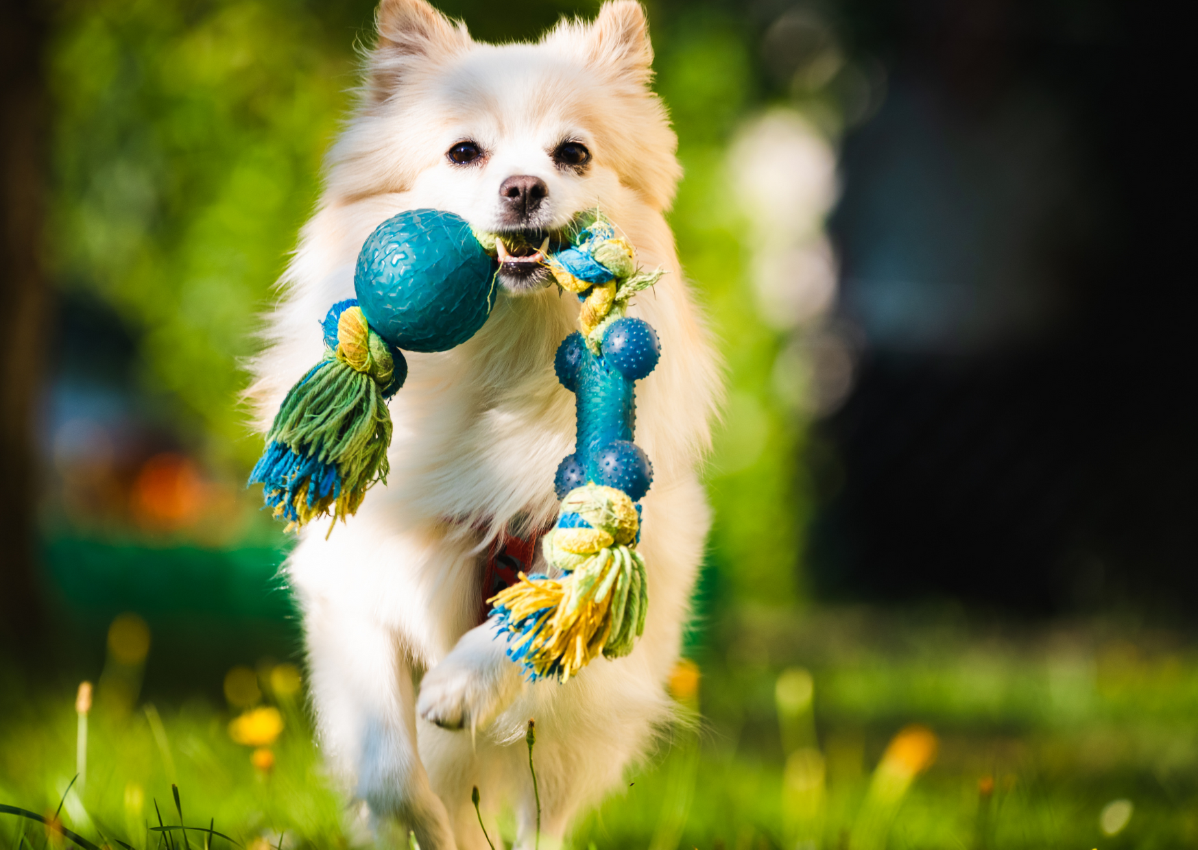 a dog playing playing outdoors of Toys to Keep Dogs Busy