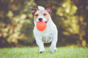 Easy Brain Games for Dogs