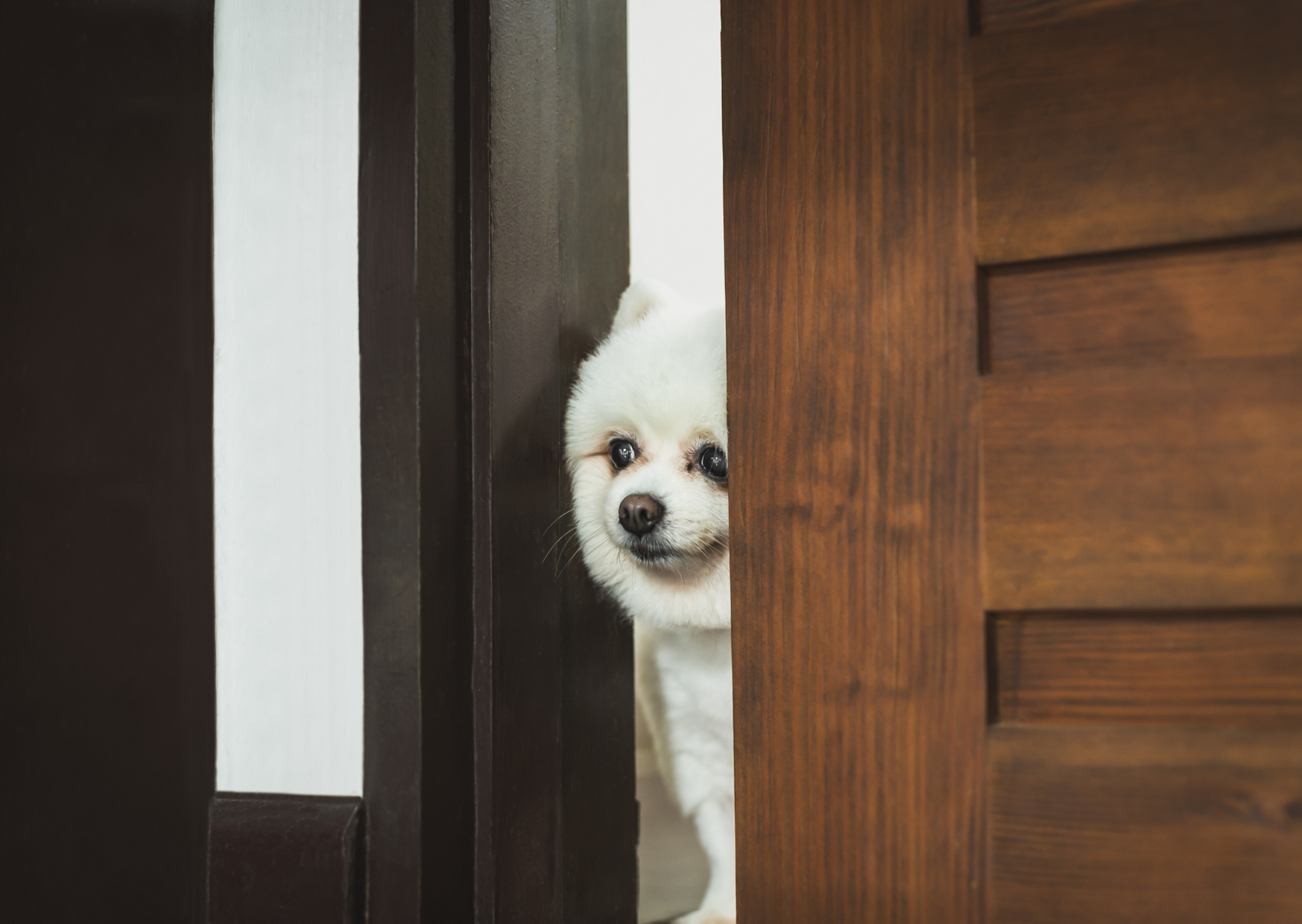 Cute Dog Hiding of Easy Brain Games for Dogs